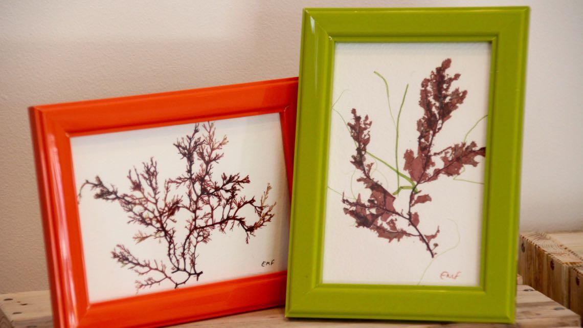 Seaweed art by Liz Foulkes.